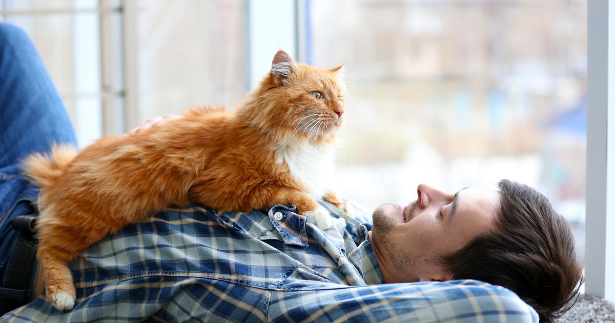 Uomo con gatto arancio